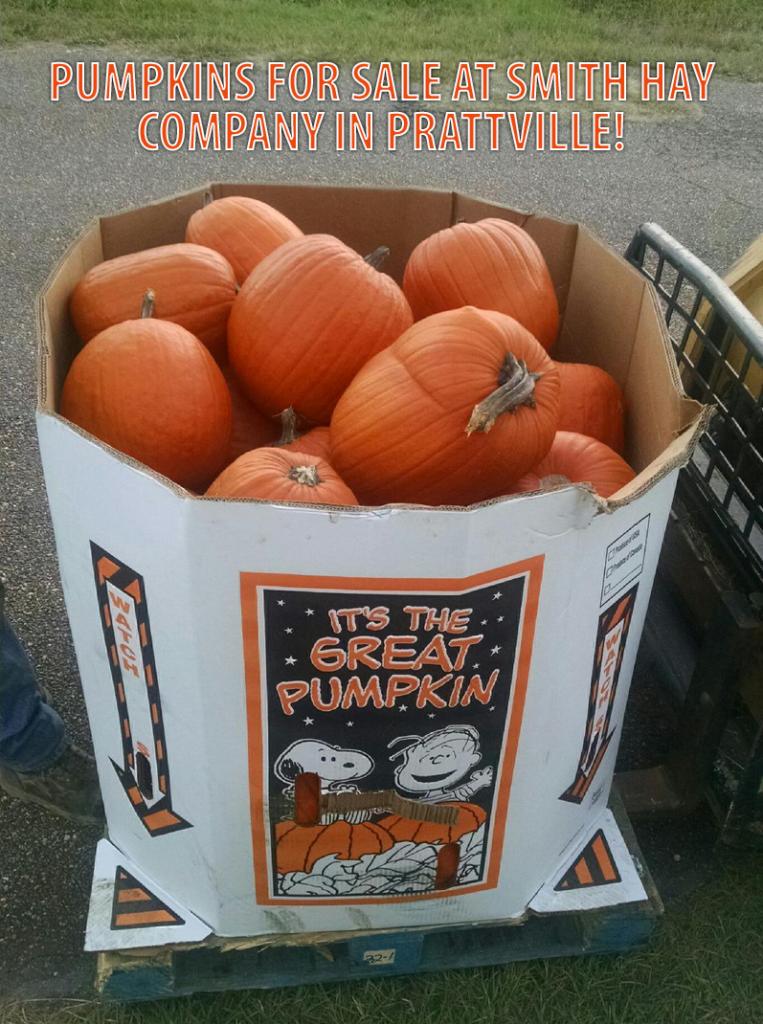 places to get pumpkins in prattville al